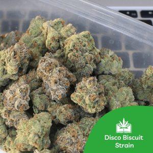 Disco Biscuit Strain